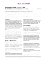 Image of agent fact sheet PDF: Burkholderia Mallei and Pseudomallei (Glanders and Melioidosis)